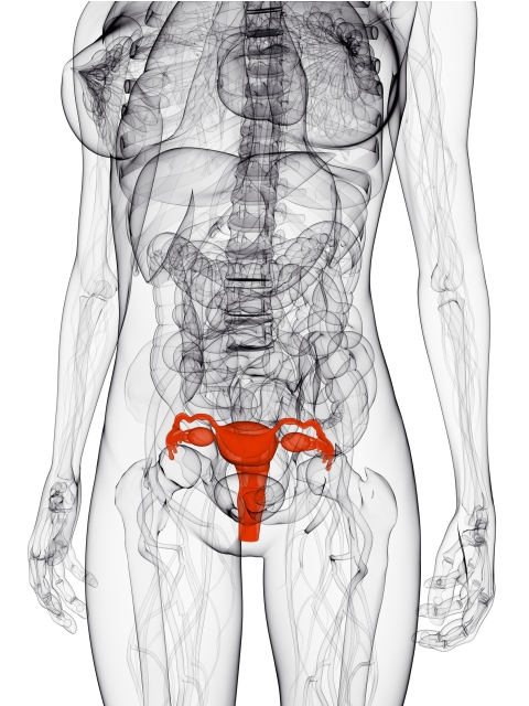 Frau-Innenansicht-Gebaermutter-und-Organe-unfruchtbarkeit-frau